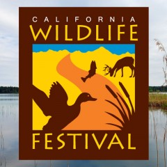 Logo DesignCalifornia Wildlife Festival
